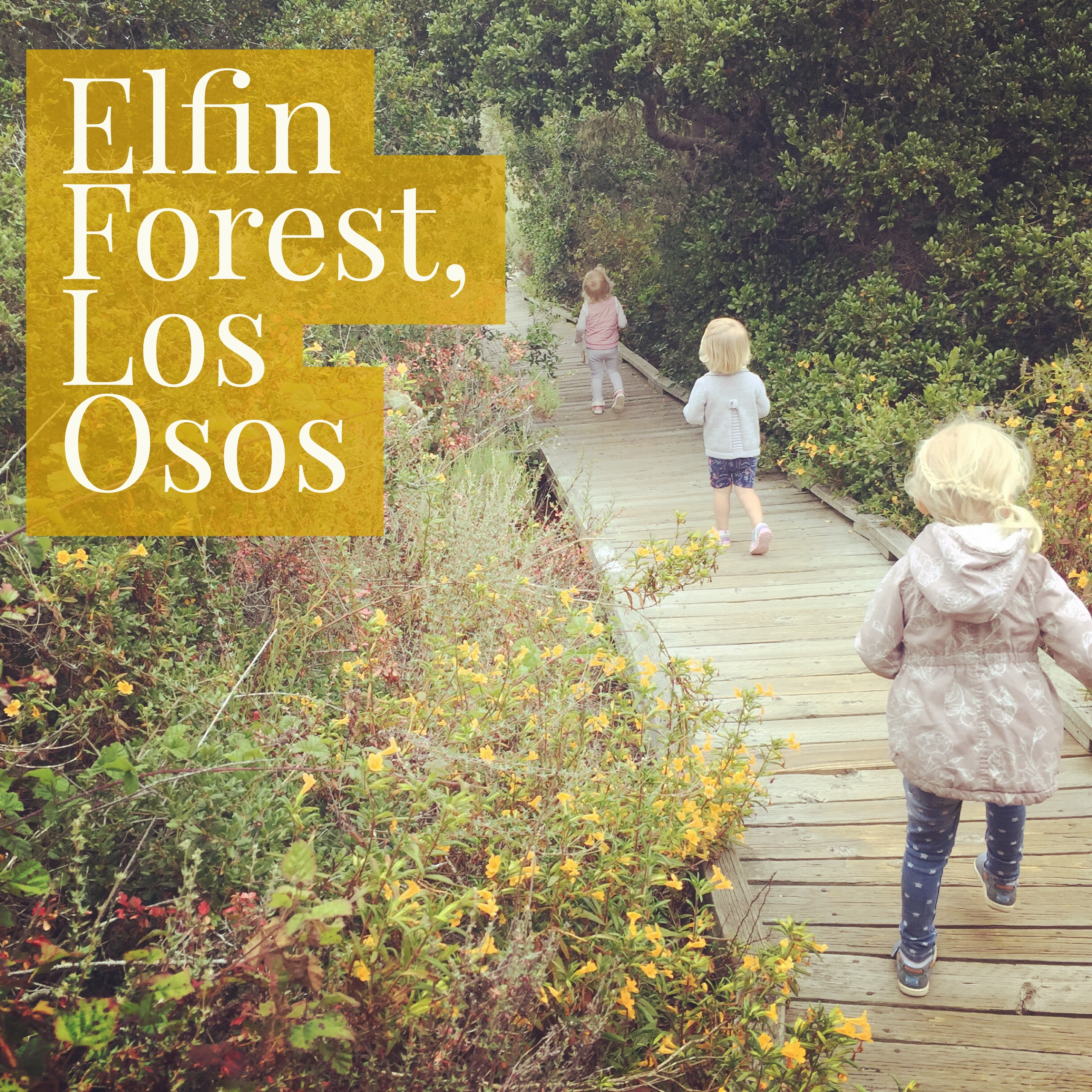 The El Moro Elfin Forest has a child friendly boardwalk for a nice hike in Los Osos.