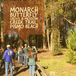 Monarch Butterfly Grove Pismo Beach California