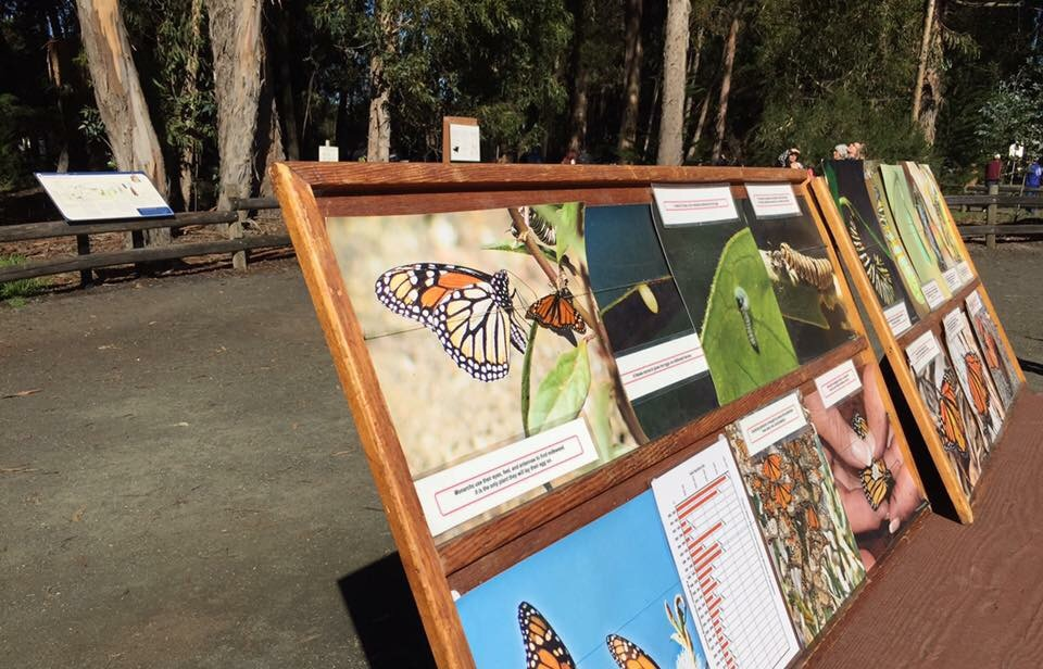 Informational boards at the Pismo Beach Monarch Butterfly Grove in San Luis Obispo County California.