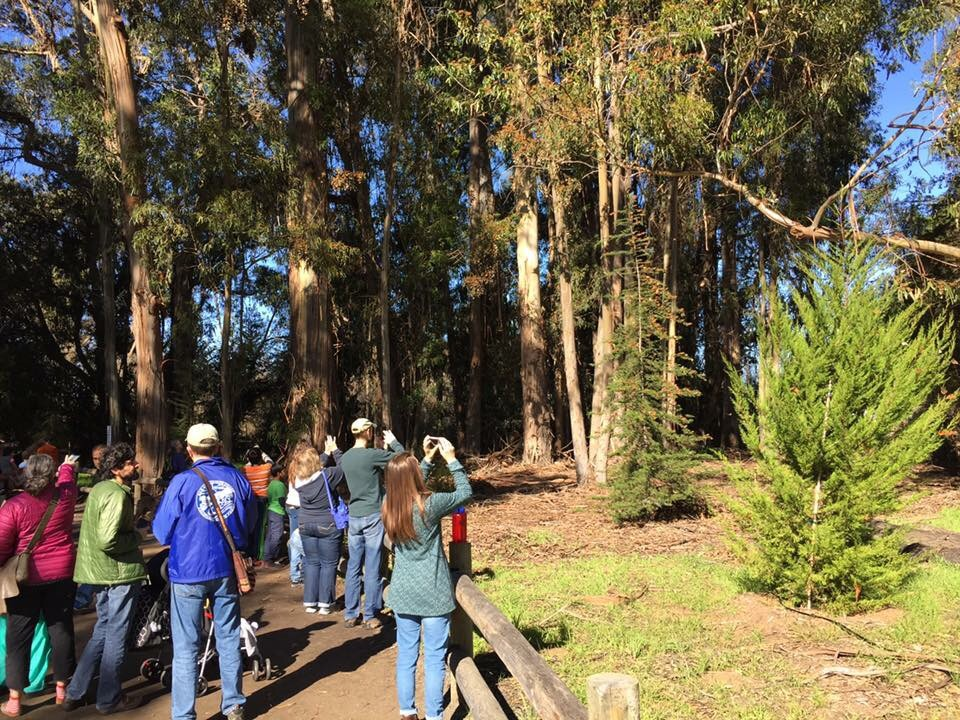 Crowds take pictures at the Pismo Beach Monarch Butterfly Grove in San Luis Obispo County California.