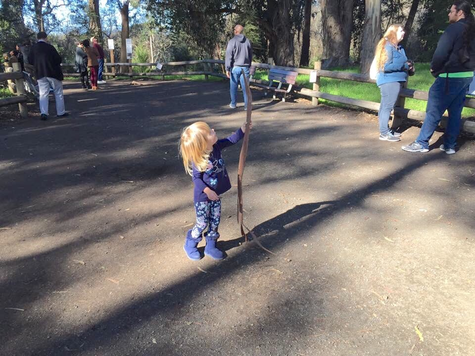 Toddler plays with giant stick at the Pismo Beach Monarch Butterfly Grove in San Luis Obispo County California.