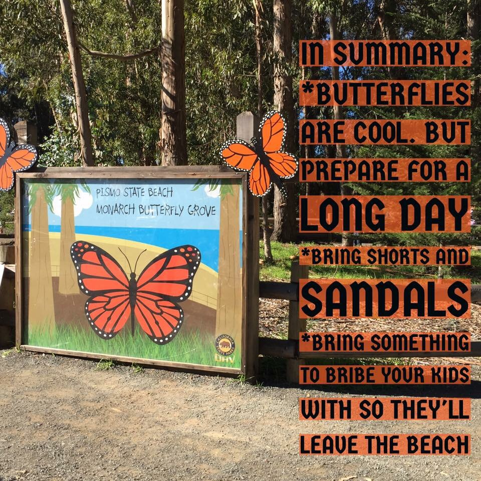 Summary of tips to an adventure to the Pismo Beach Monarch Butterfly Grove in San Luis Obispo County California.