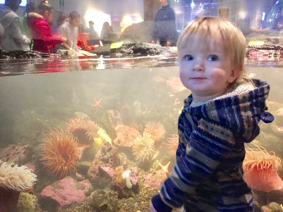 Baby boy looks at starfish and sea anemone in Seattle Aquarium touch tank.