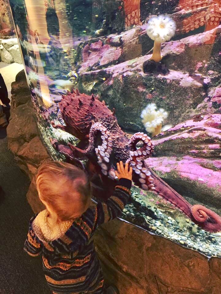 Baby boy gives Giant Pacific Octopus a high-five at the Seattle Aquarium.
