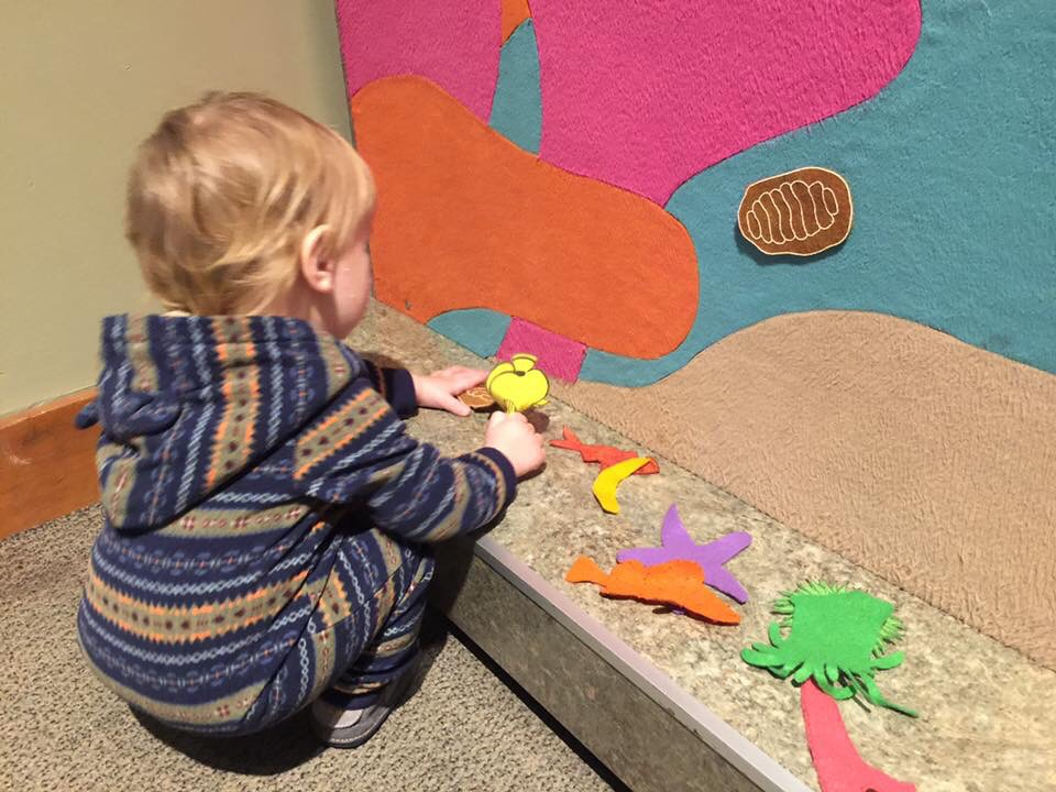 Baby boy enjoys sticking cloth sea creatures to a felt activity wall at the Seattle Aquarium