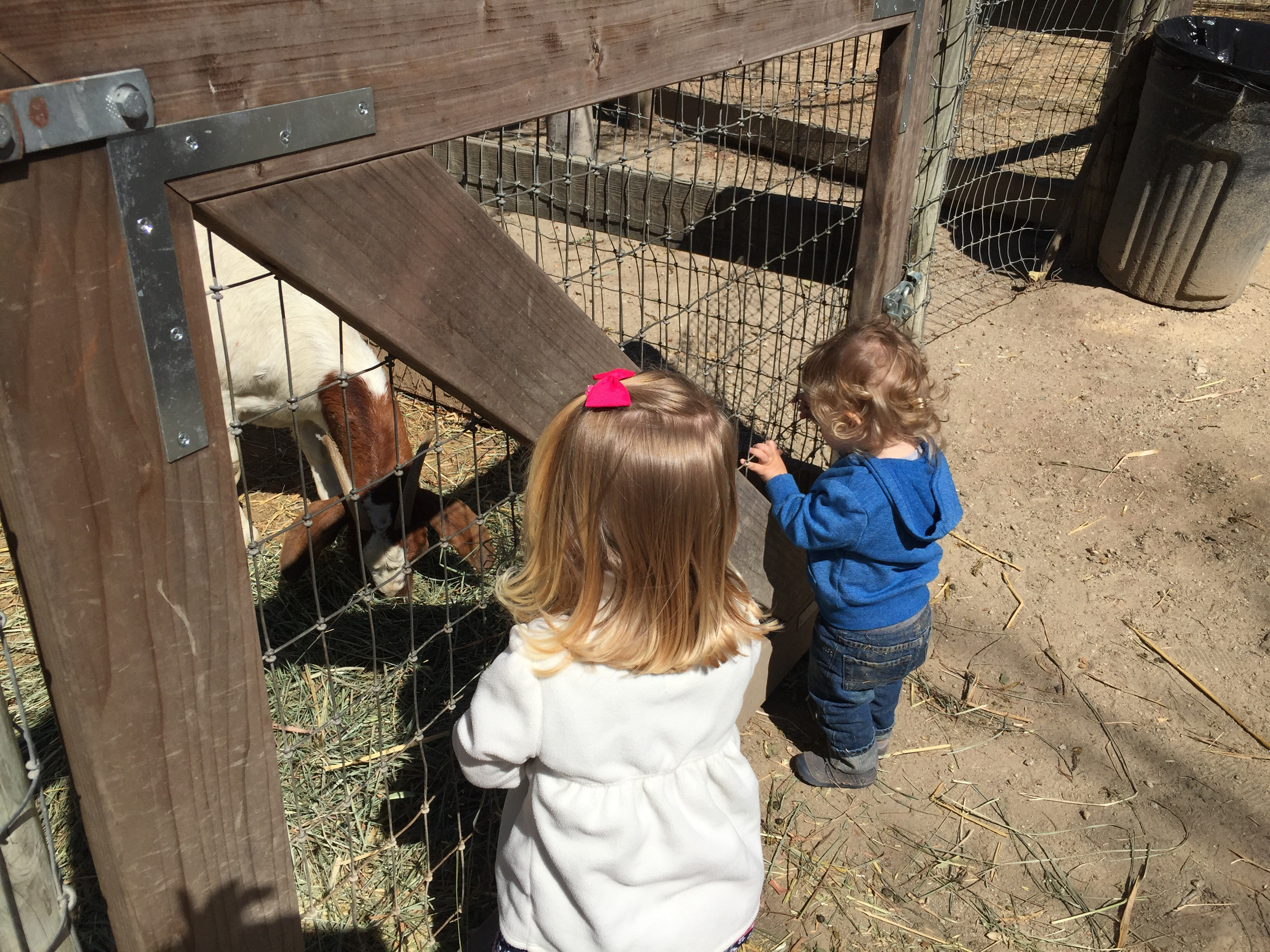 Little boy and little girl look at the baby goats at Avila Valley Barn in San Luis Obispo.