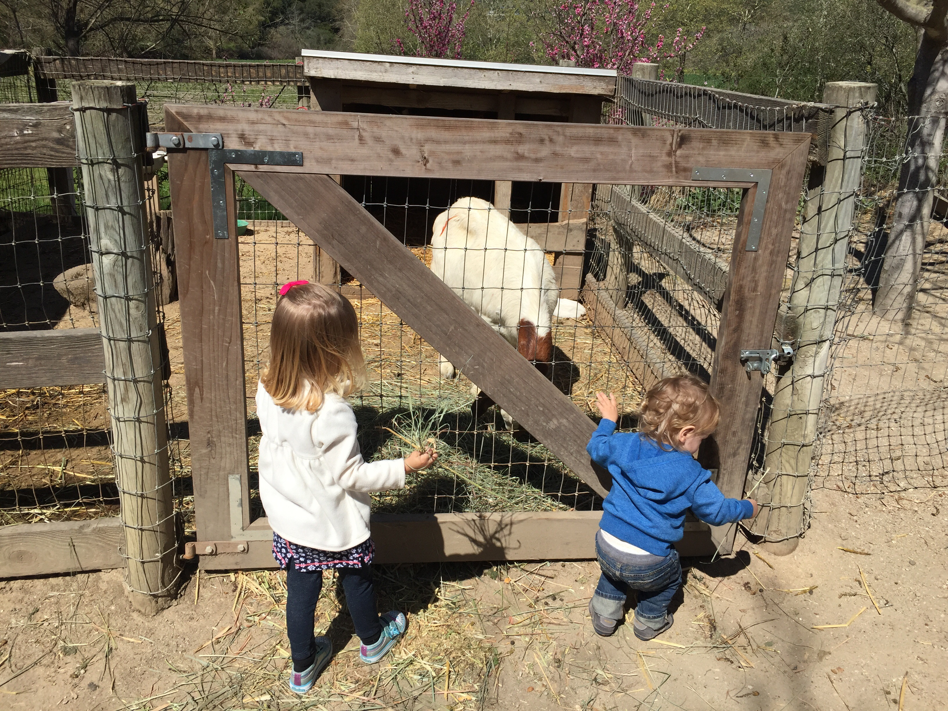Toddler and baby feeding the goats at Avila Valley Barn in San Luis Obispo.