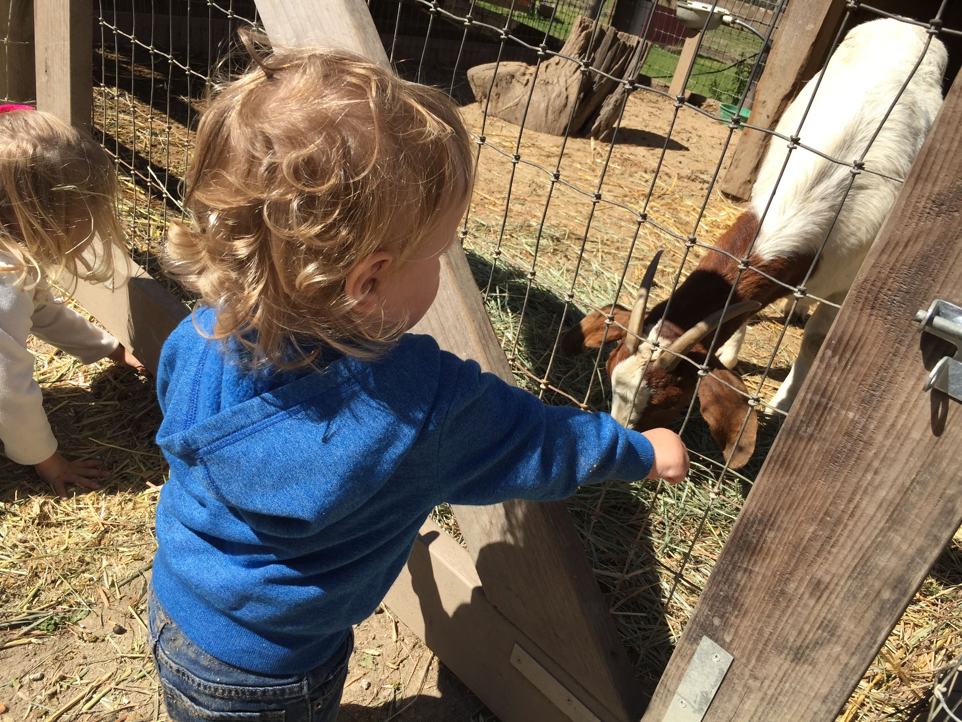 Closeup shot of toddler and baby feeding the goats at Avila Valley Barn in San Luis Obispo.