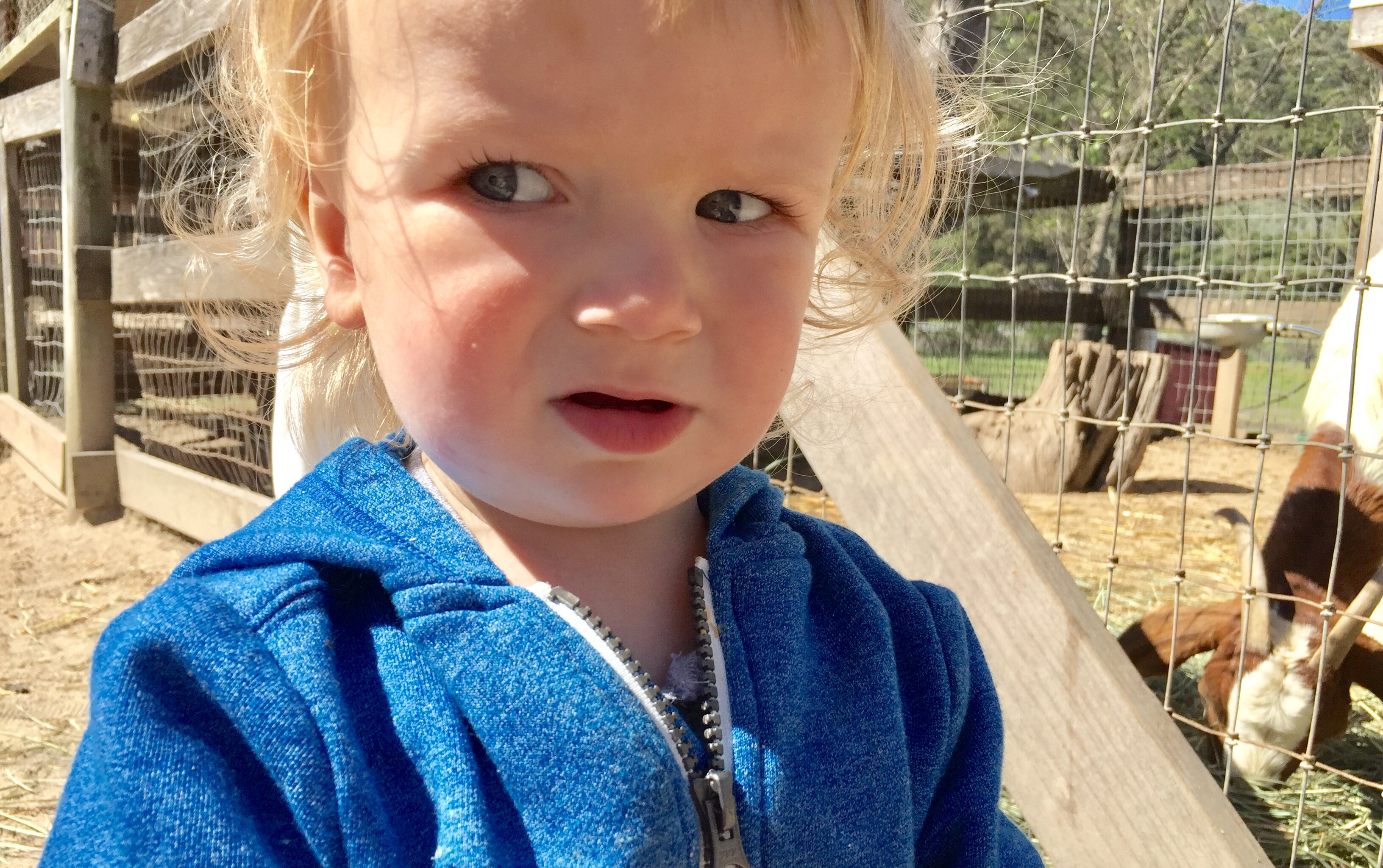 Baby boy gives a funny look at Avila Valley Barn in San Luis Obispo.