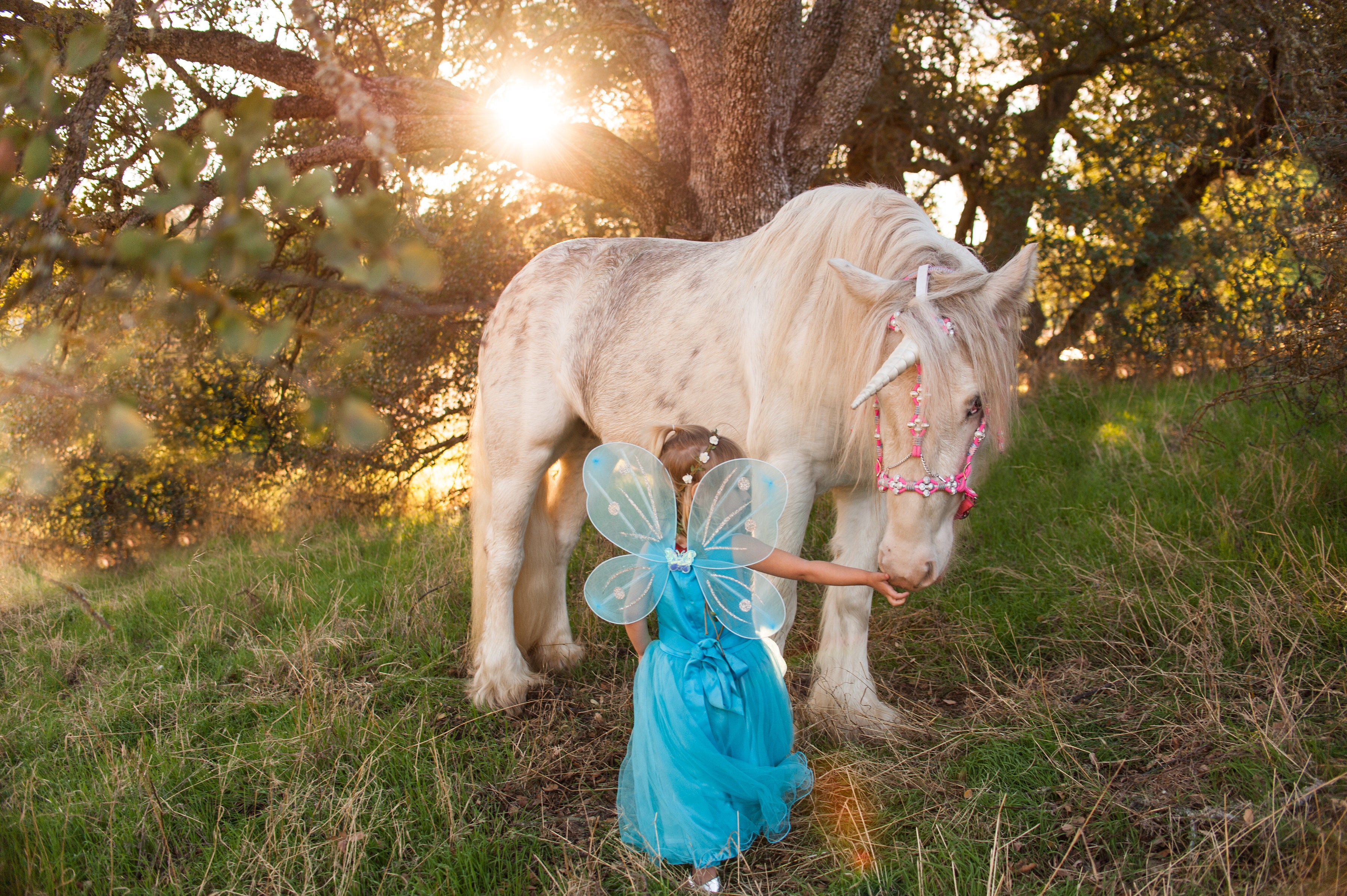 Fairy princess reaches out to a magical unicorn under the sunset in Creston, California.