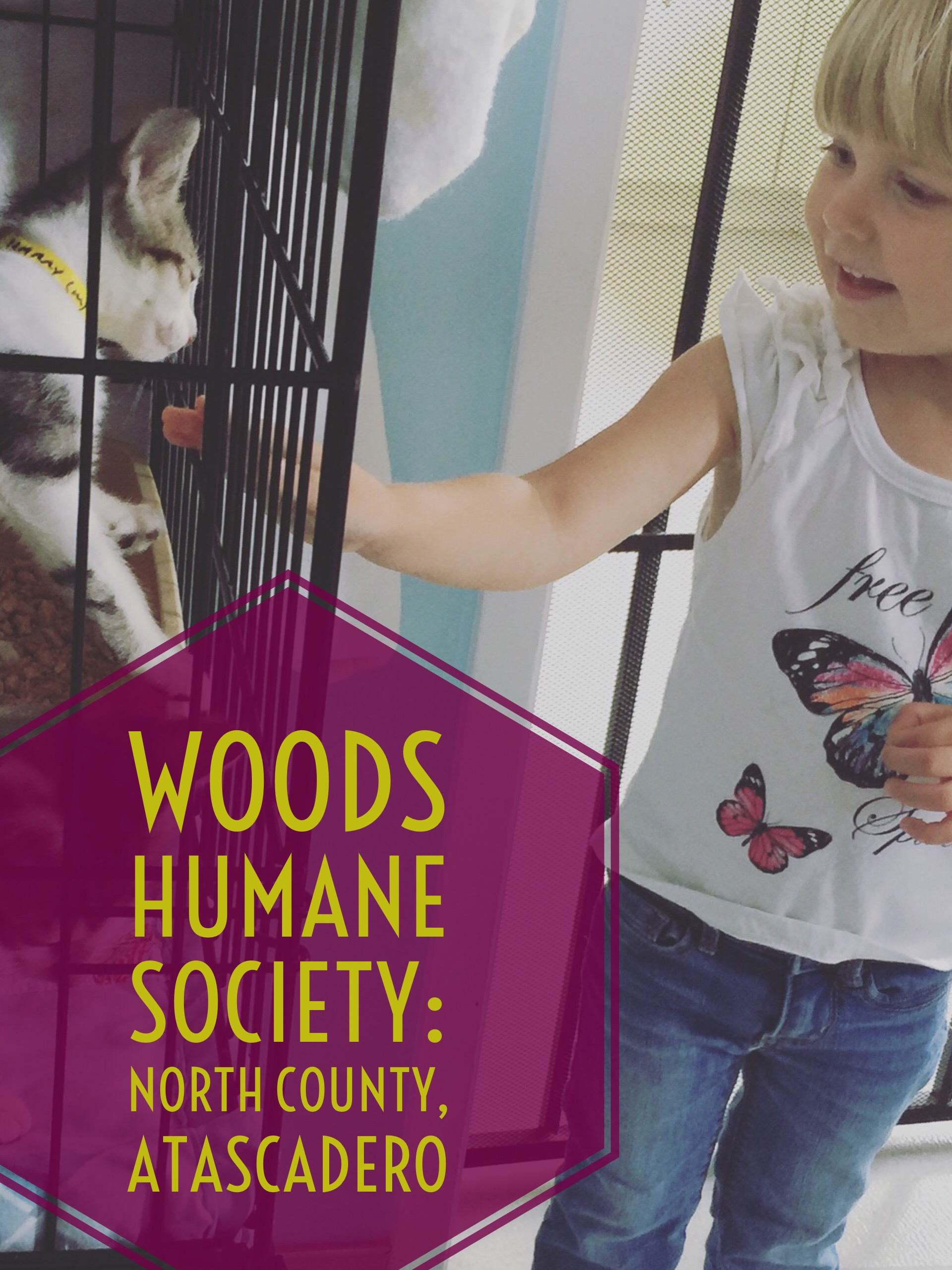 Blog post about petting the cats at Woods Humane Society, North County Campus in Atascadero California. From the mommy blog Two In Tow & On The Go.