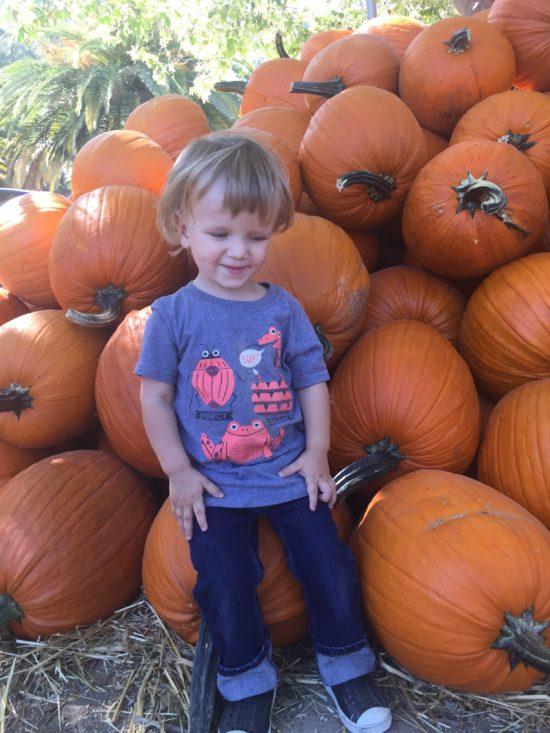 Pumpkins at Avila Valley Barn in SLO