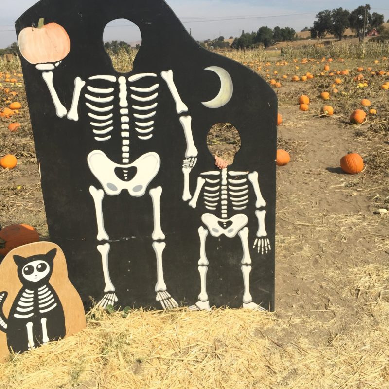 River K Pumpkin Patch Paso Robles skeleton cutouts
