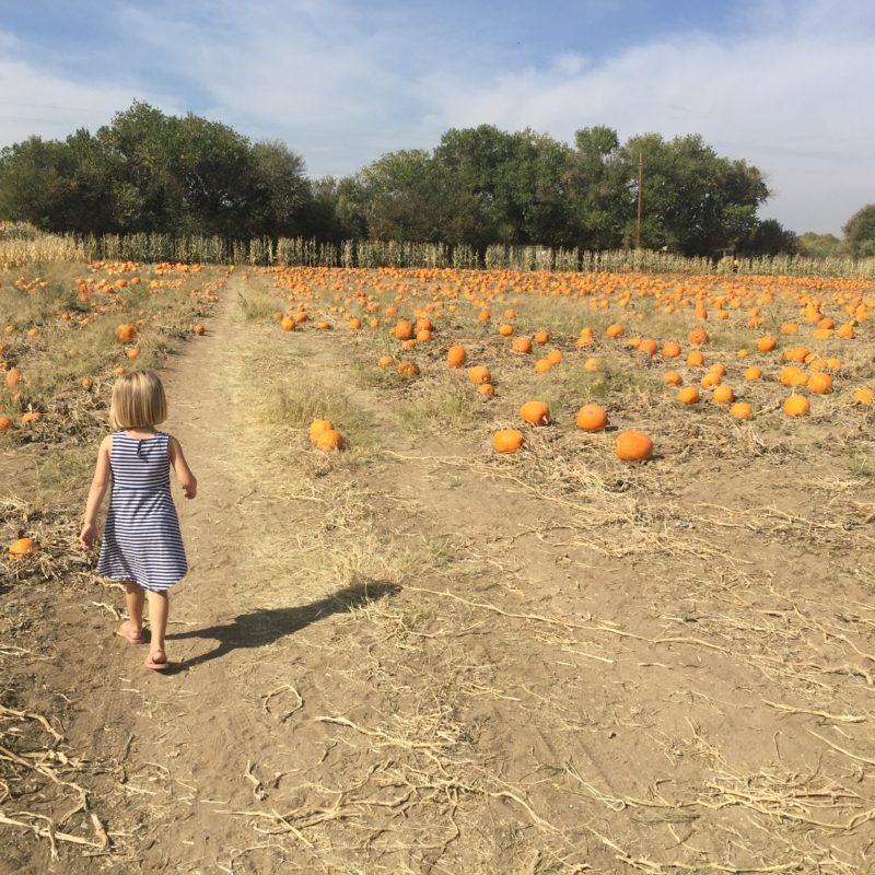 River K Pumpkin Patch Paso Robles field toddler