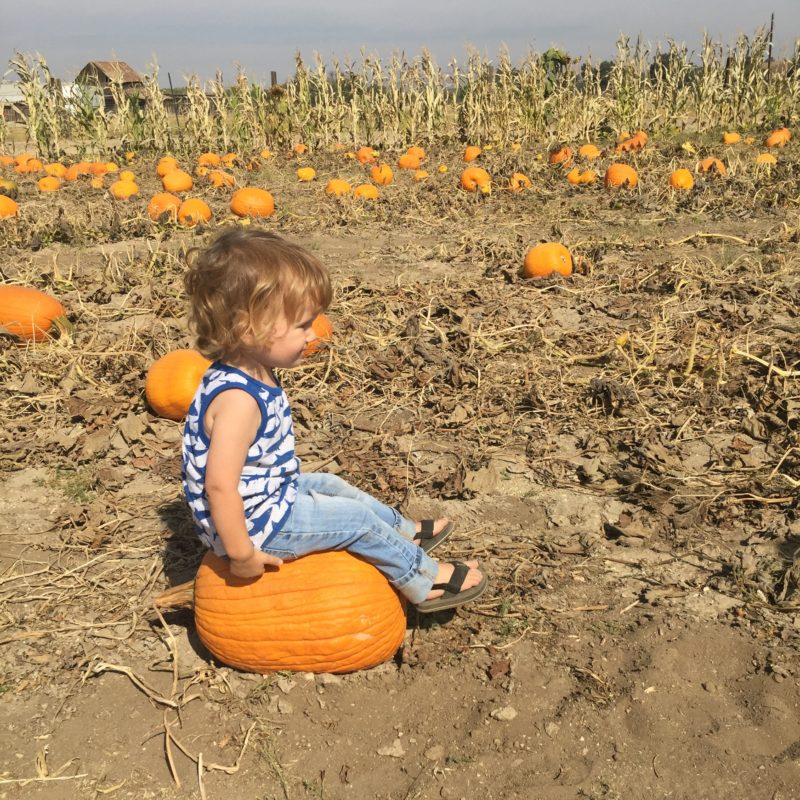 River K Pumpkin Patch Paso Robles baby sitting on a pumpkin