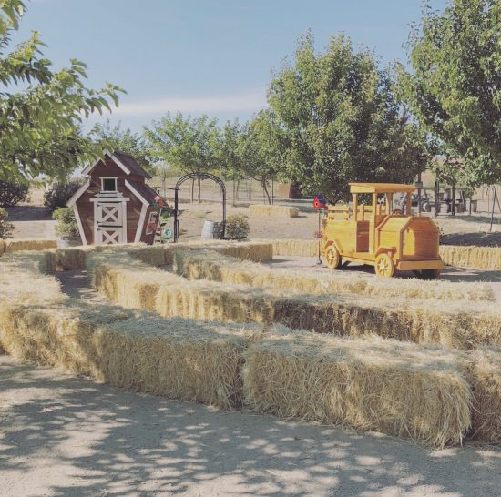 Grasses - Soil
