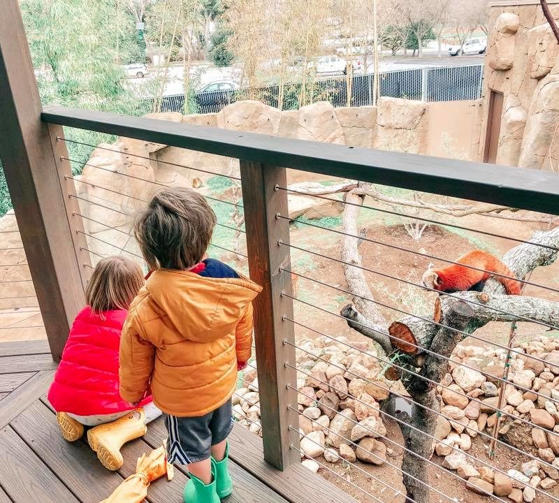 New Red Panda Exhibit Opens at Atascadero's Charles Paddock Zoo _2