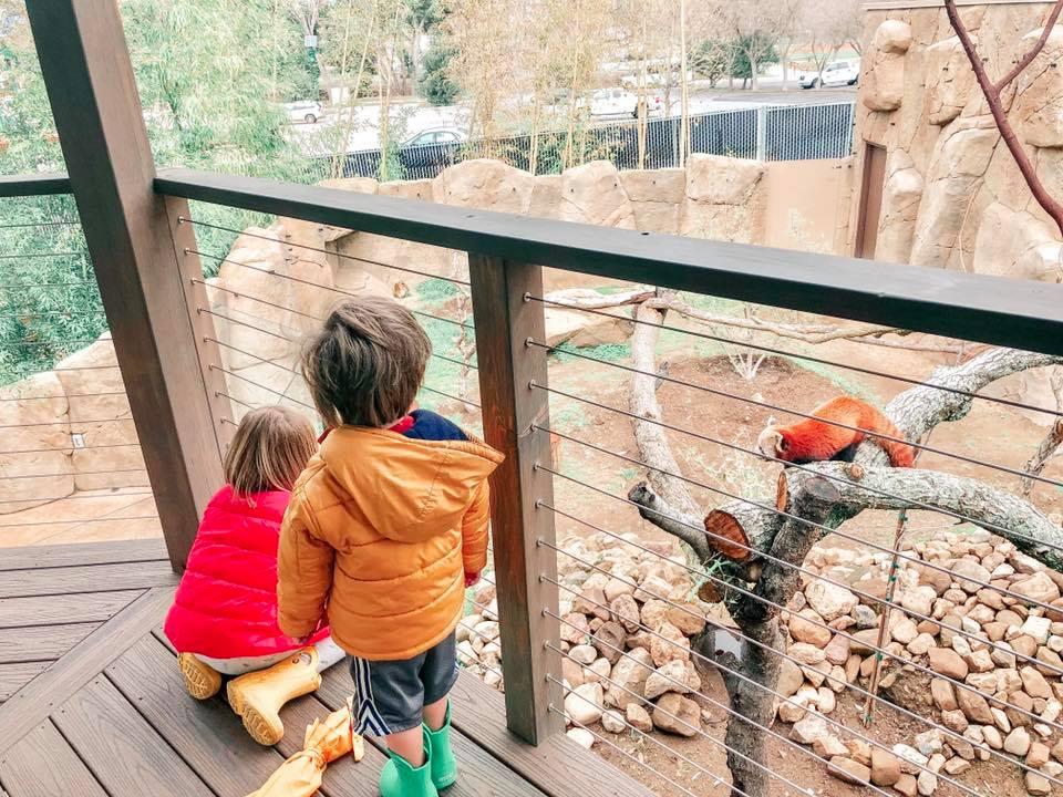 New Red Panda Exhibit Opens at Atascadero's Charles Paddock Zoo _2