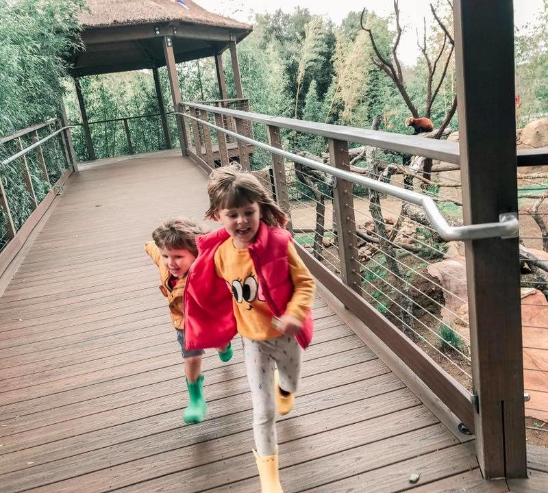 New Red Panda Exhibit Opens at Atascadero's Charles Paddock Zoo _1