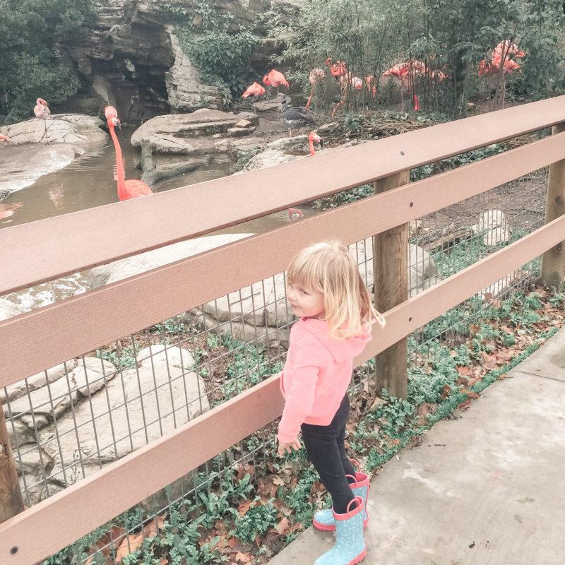 Atascadero Charles Paddock Zoo 3
