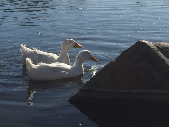 Barney Schwartz Park Lake Paso Robles Review - 7
