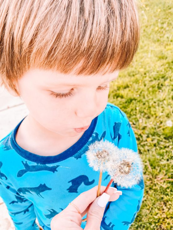 Little boy blowing dandilions