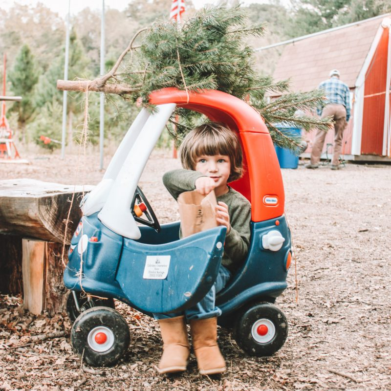 Photograph - Kid in a play car with little christmas tree on top