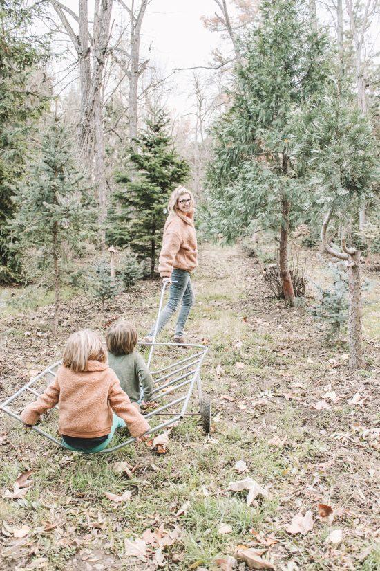 Mom pulling kids through tree farm